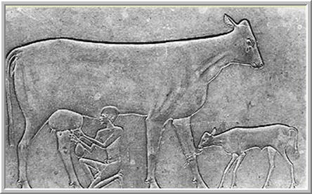 Dairy products in ancient Egypt