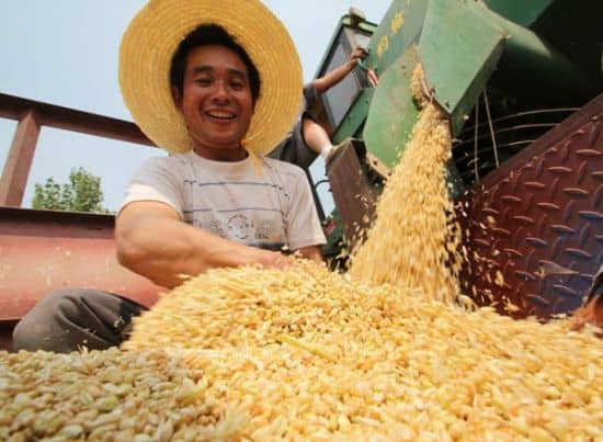 wheat farmer in china