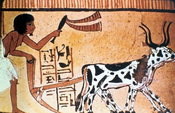 Ox-drawn Plow ancient egypt inventions